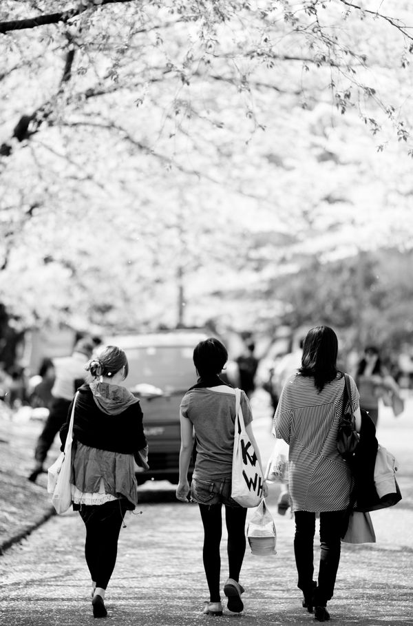 CLOUDS OF CHERRY BLOSSOMS III