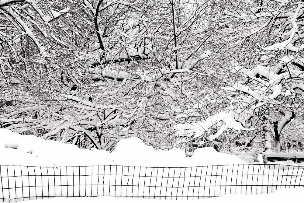 SNOW STORM III
