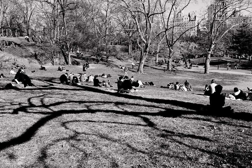 AT CENTRAL PARK- SWIRLS IN THE PARK