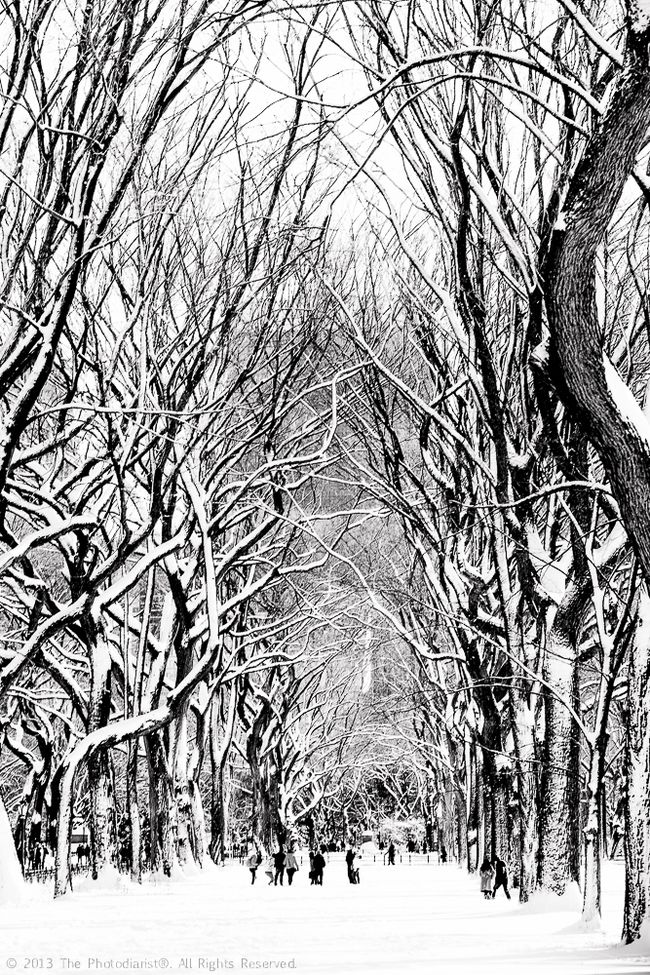 CENTRAL PARK- SNOW FROM STORM NEMO